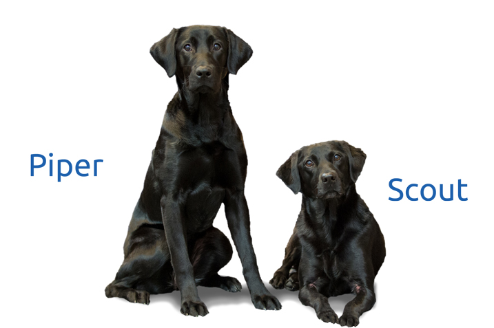 Two black dogs with their names Piper and Scout